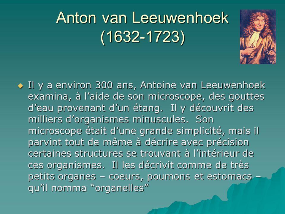 Anton van Leeuwenhoek (1632-1723) Il y a environ 300 ans, Antoine van Leeuwenhoek examina, à laide de son microscope, des gouttes deau provenant dun étang.