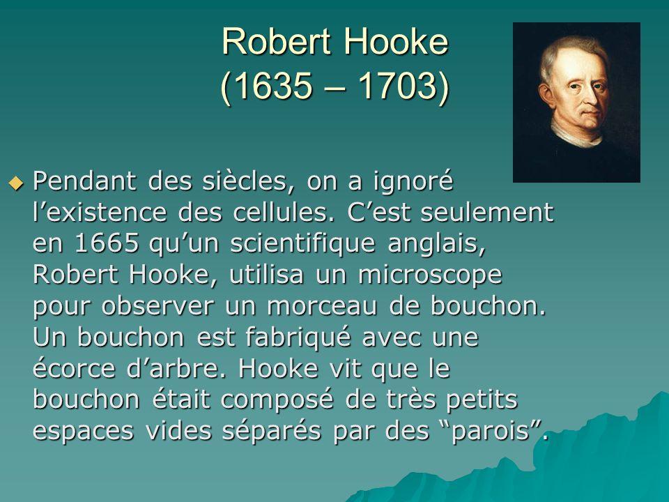 Robert Hooke (1635 – 1703) Pendant des siècles, on a ignoré lexistence des cellules. Cest seulement en 1665 quun scientifique anglais, Robert Hooke, u