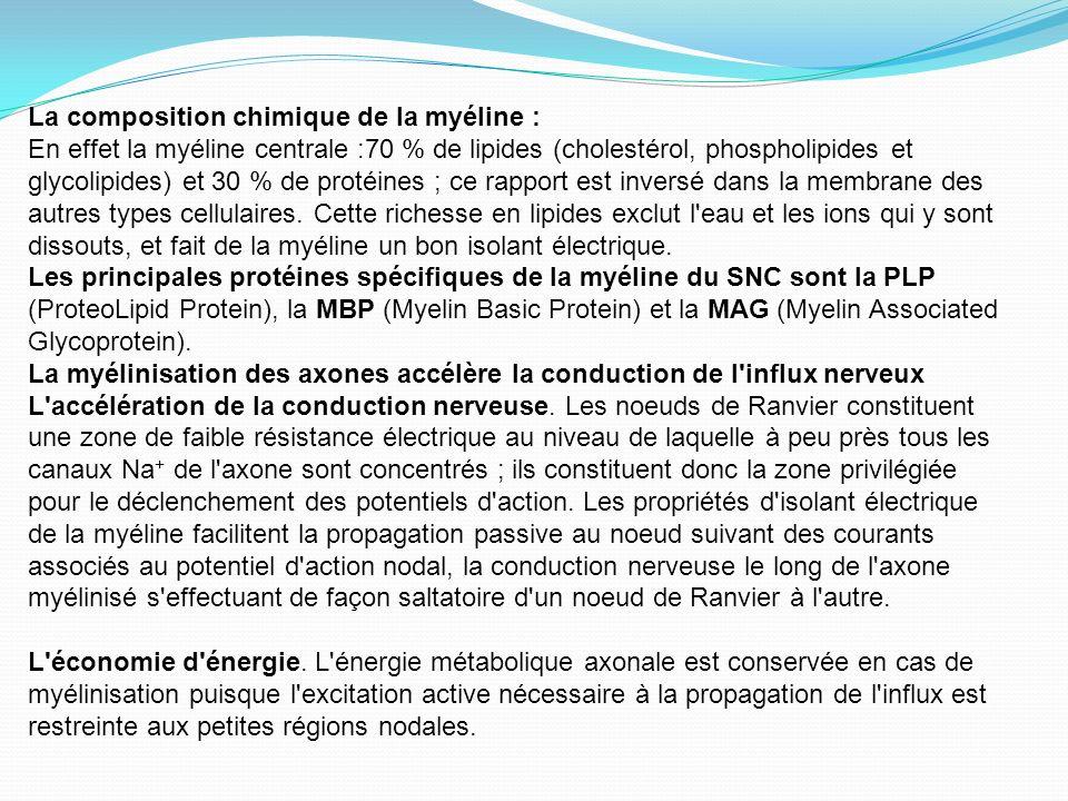 La composition chimique de la myéline : En effet la myéline centrale :70 % de lipides (cholestérol, phospholipides et glycolipides) et 30 % de protéin