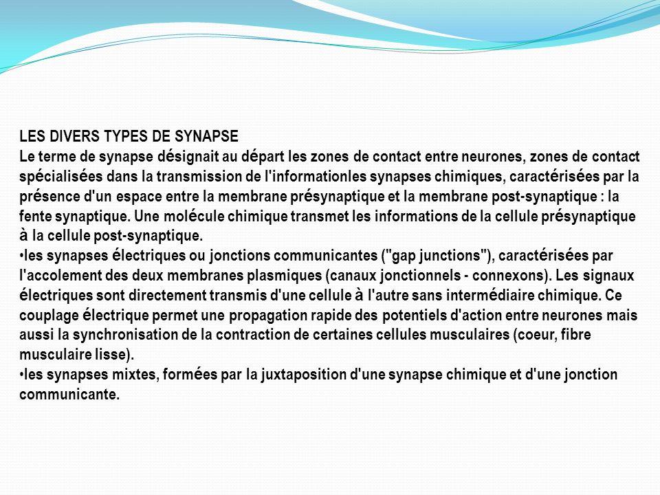 LES DIVERS TYPES DE SYNAPSE Le terme de synapse d é signait au d é part les zones de contact entre neurones, zones de contact sp é cialis é es dans la