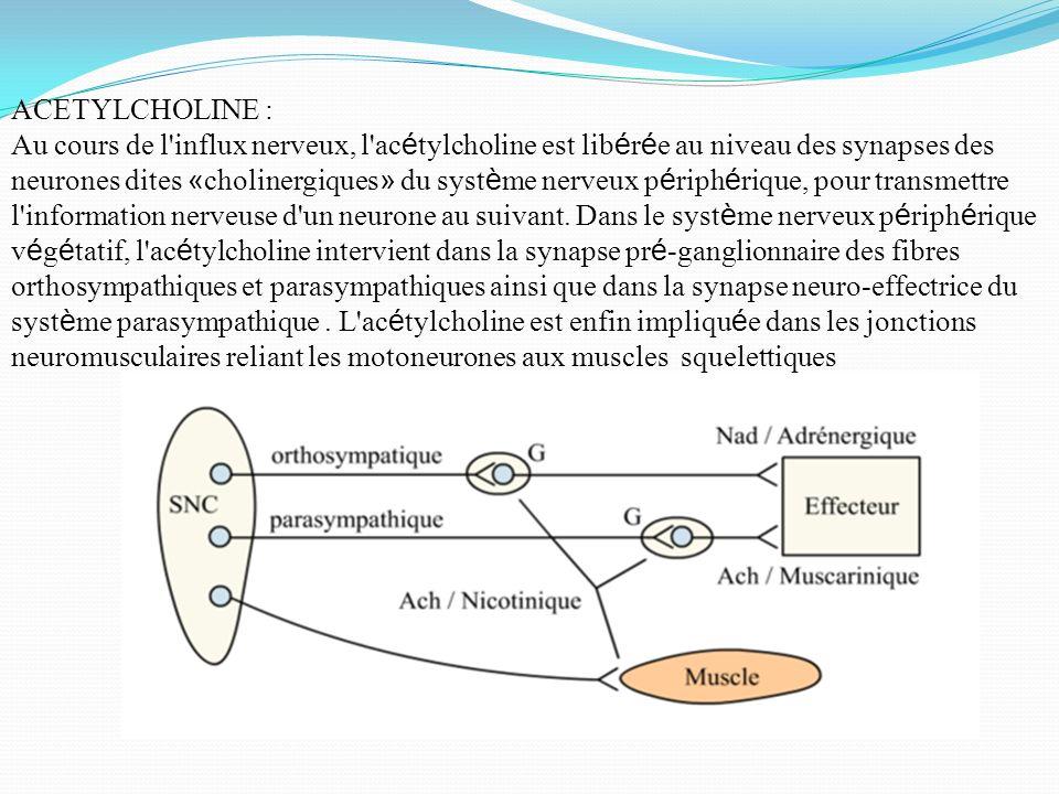 ACETYLCHOLINE : Au cours de l'influx nerveux, l'ac é tylcholine est lib é r é e au niveau des synapses des neurones dites « cholinergiques » du syst è