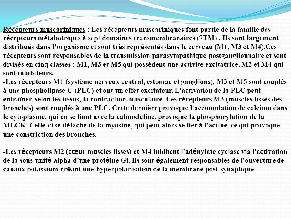 R é cepteurs muscariniques : Les r é cepteurs muscariniques font partie de la famille des r é cepteurs m é tabotropes à sept domaines transmembranaire