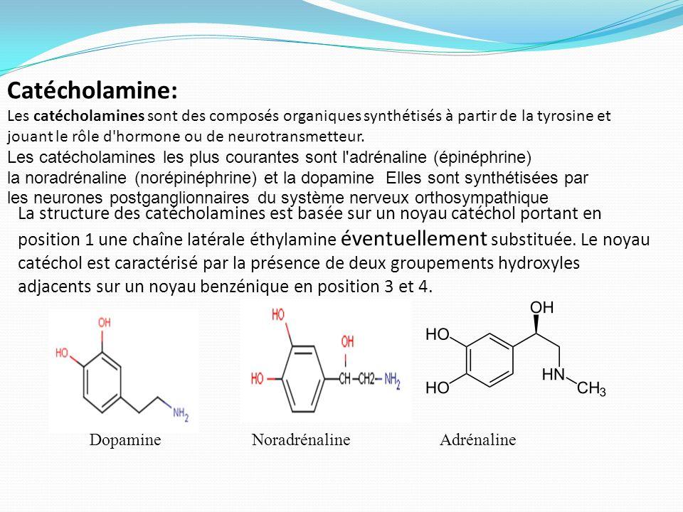 La structure des catécholamines est basée sur un noyau catéchol portant en position 1 une chaîne latérale éthylamine éventuellement substituée. Le noy
