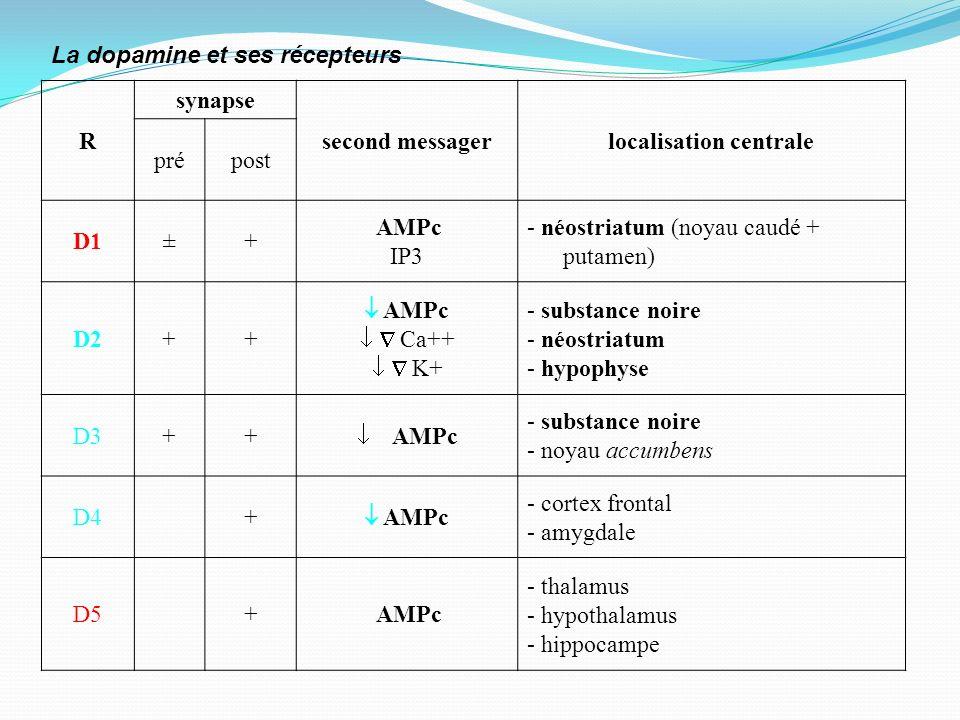 R synapse second messagerlocalisation centrale prépost D1 + AMPc IP3 - néostriatum (noyau caudé + putamen) D2++ AMPc Ca++ K+ - substance noire - néost