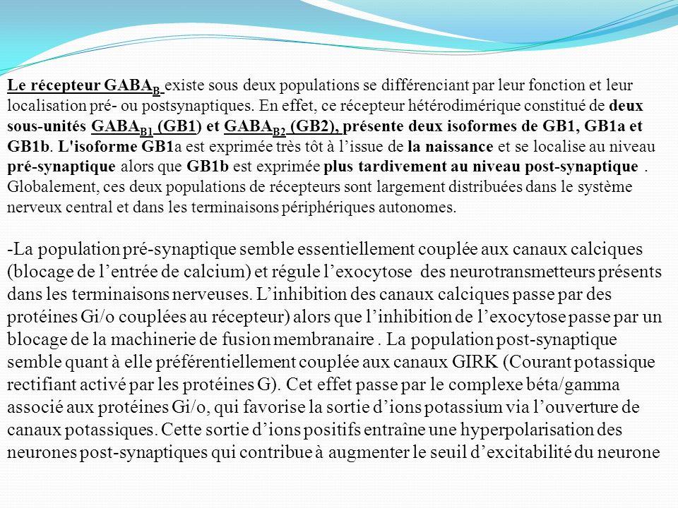 Le récepteur GABA B existe sous deux populations se différenciant par leur fonction et leur localisation pré- ou postsynaptiques. En effet, ce récepte