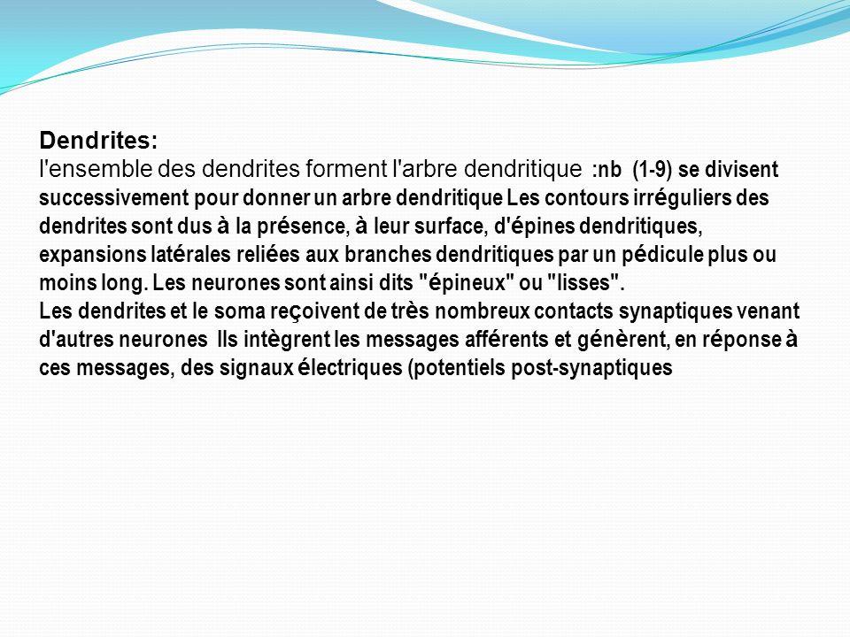 Dendrites: l'ensemble des dendrites forment l'arbre dendritique :nb (1-9) se divisent successivement pour donner un arbre dendritique Les contours irr