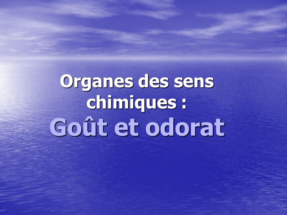Organes des sens chimiques : Goût et odorat