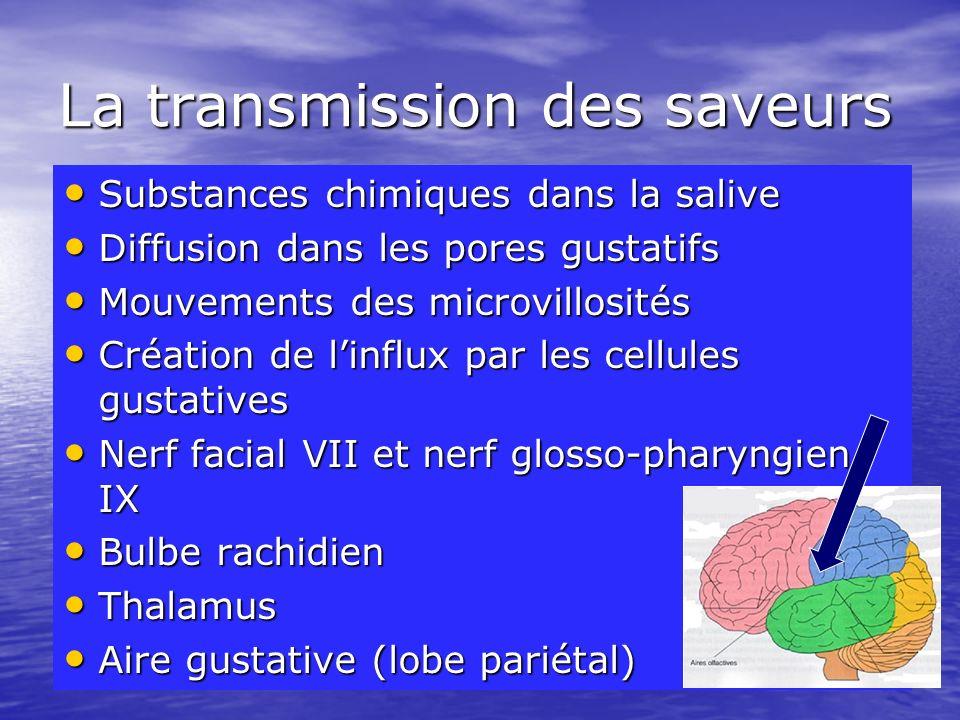 La transmission des saveurs Substances chimiques dans la salive Substances chimiques dans la salive Diffusion dans les pores gustatifs Diffusion dans