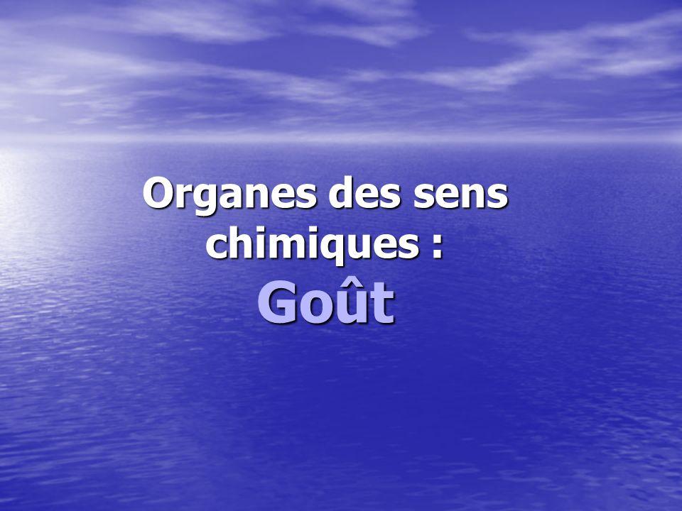 Organes des sens chimiques : Goût