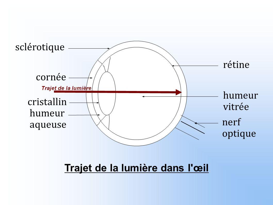 rétine humeur vitrée nerf optique sclérotique cornée humeur aqueuse cristallin Trajet de la lumière dans l œil Trajet de la lumière