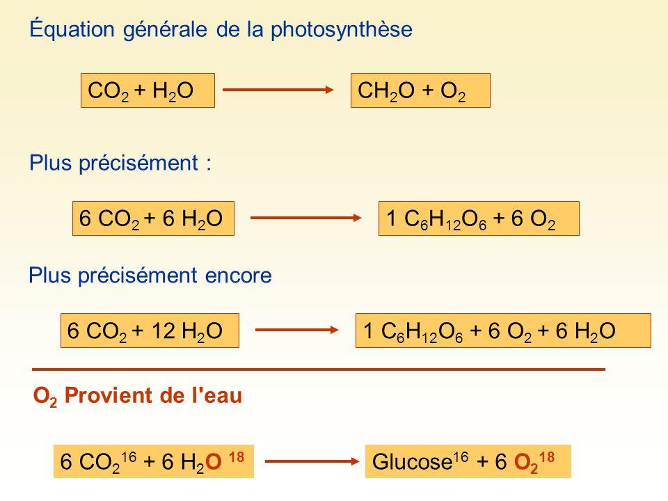 Équation générale de la photosynthèse CO 2 + H 2 OCH 2 O + O 2 Plus précisément : 6 CO 2 + 6 H 2 O1 C 6 H 12 O 6 + 6 O 2 Plus précisément encore 6 CO 2 + 12 H 2 O1 C 6 H 12 O 6 + 6 O 2 + 6 H 2 O O 2 Provient de l eau 6 CO 2 16 + 6 H 2 O 18 Glucose 16 + 6 O 2 18