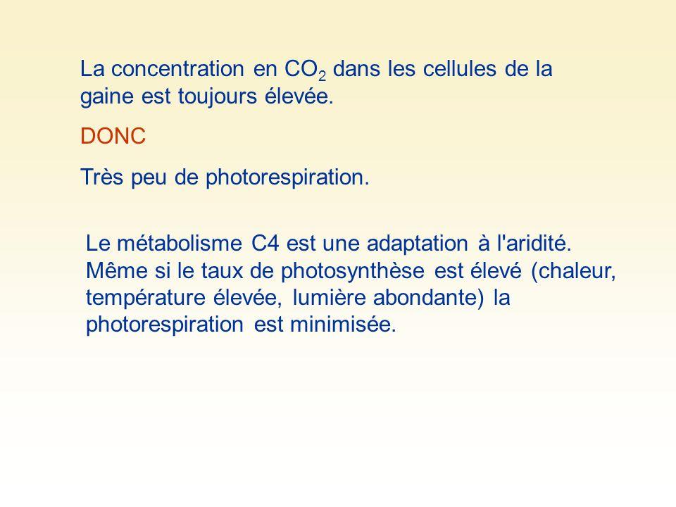 La concentration en CO 2 dans les cellules de la gaine est toujours élevée.