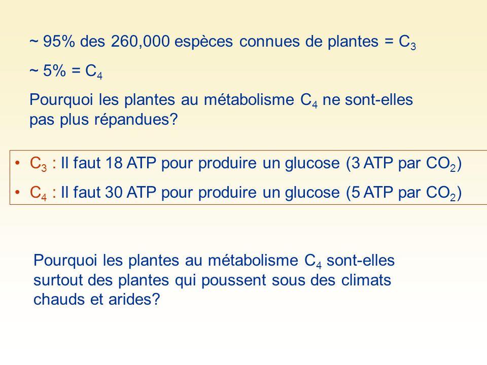 ~ 95% des 260,000 espèces connues de plantes = C 3 ~ 5% = C 4 Pourquoi les plantes au métabolisme C 4 ne sont-elles pas plus répandues? C 3 : Il faut