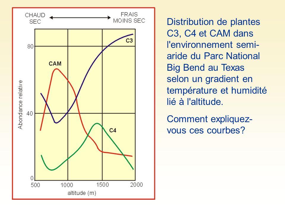 Distribution de plantes C3, C4 et CAM dans l environnement semi- aride du Parc National Big Bend au Texas selon un gradient en température et humidité lié à l altitude.