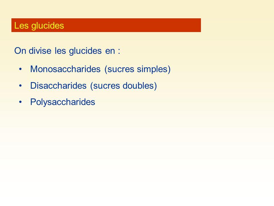 Les glucides On divise les glucides en : Monosaccharides (sucres simples) Disaccharides (sucres doubles) Polysaccharides