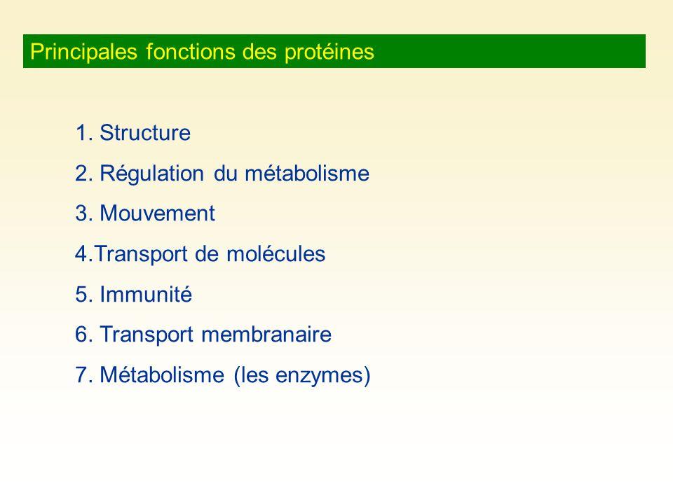 Principales fonctions des protéines 1. Structure 2. Régulation du métabolisme 3. Mouvement 4.Transport de molécules 5. Immunité 6. Transport membranai
