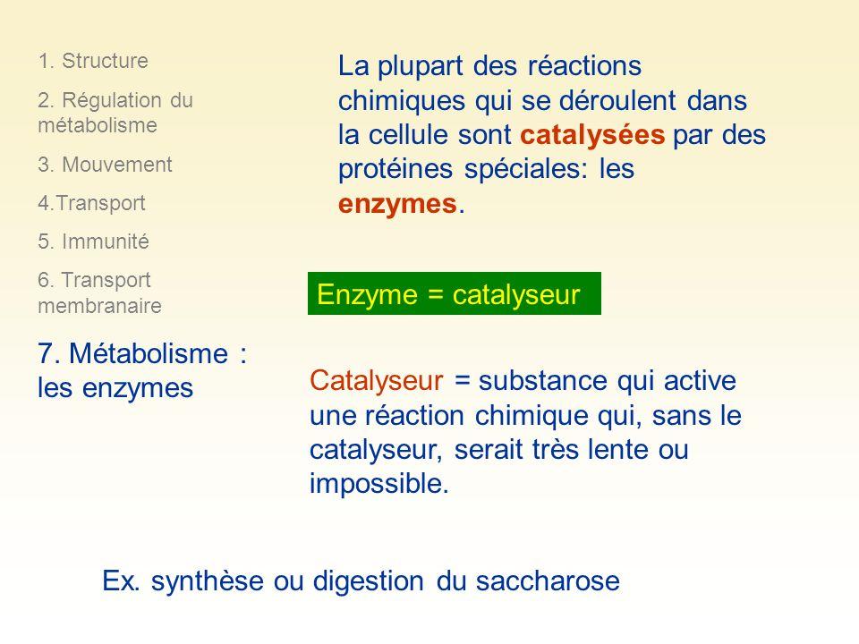 Catalyseur = substance qui active une réaction chimique qui, sans le catalyseur, serait très lente ou impossible. Ex. synthèse ou digestion du sacchar