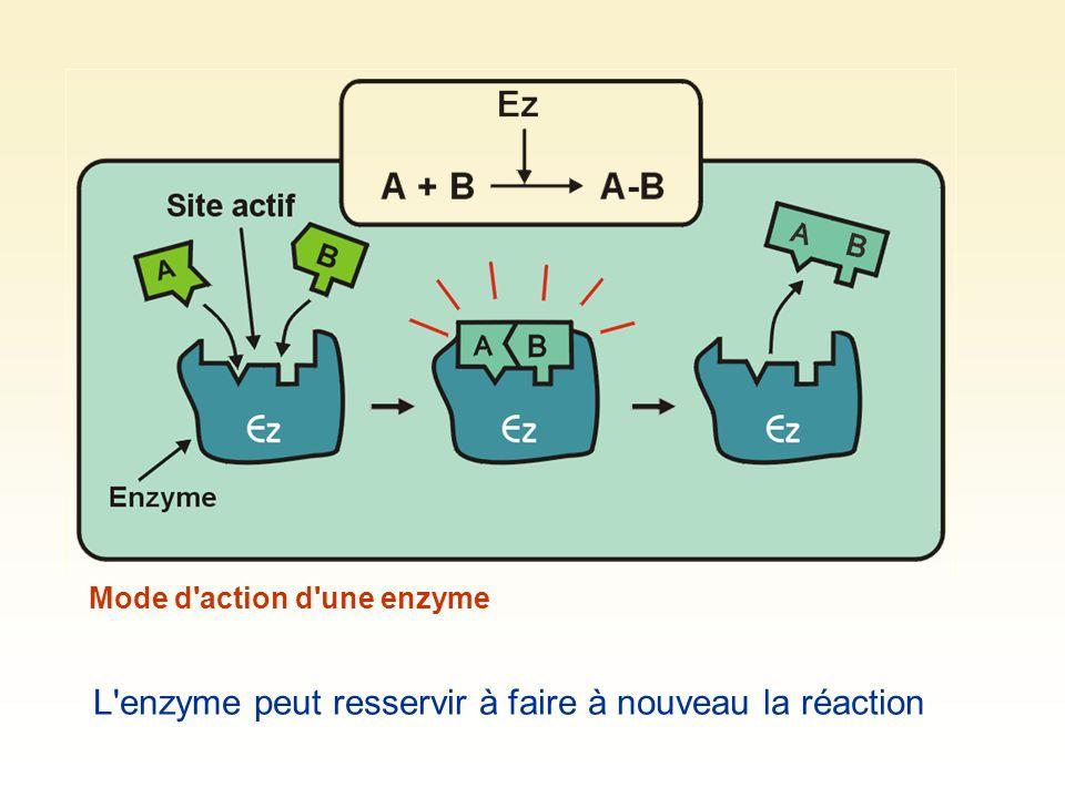 Mode d'action d'une enzyme L'enzyme peut resservir à faire à nouveau la réaction