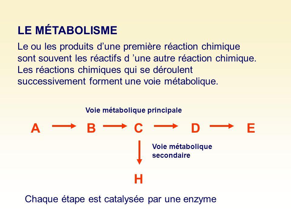 ABCDE Voie métabolique principale H Voie métabolique secondaire Le ou les produits dune première réaction chimique sont souvent les réactifs d une aut