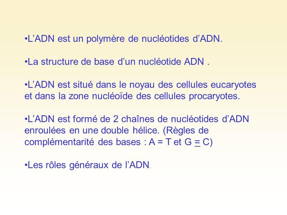 LADN est un polymère de nucléotides dADN. La structure de base dun nucléotide ADN. LADN est situé dans le noyau des cellules eucaryotes et dans la zon