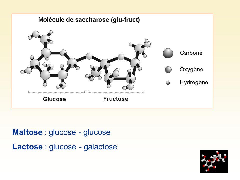 Pouvoir sucrant des glucides Saccharose :100 Fructose : 114 Glucose : 69 Galactose :63 Maltose :46 Lactose : 16 Les dissaccharides ne peuvent pas être directement absorbés par le sang.
