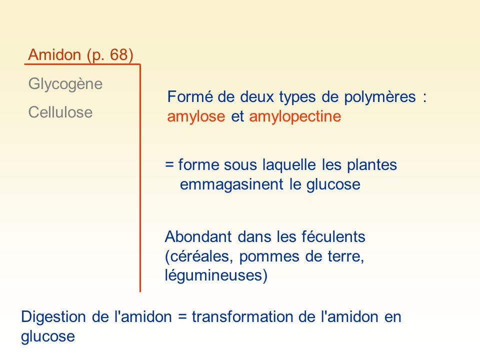 Amidon (p. 68) Glycogène Cellulose Formé de deux types de polymères : amylose et amylopectine = forme sous laquelle les plantes emmagasinent le glucos
