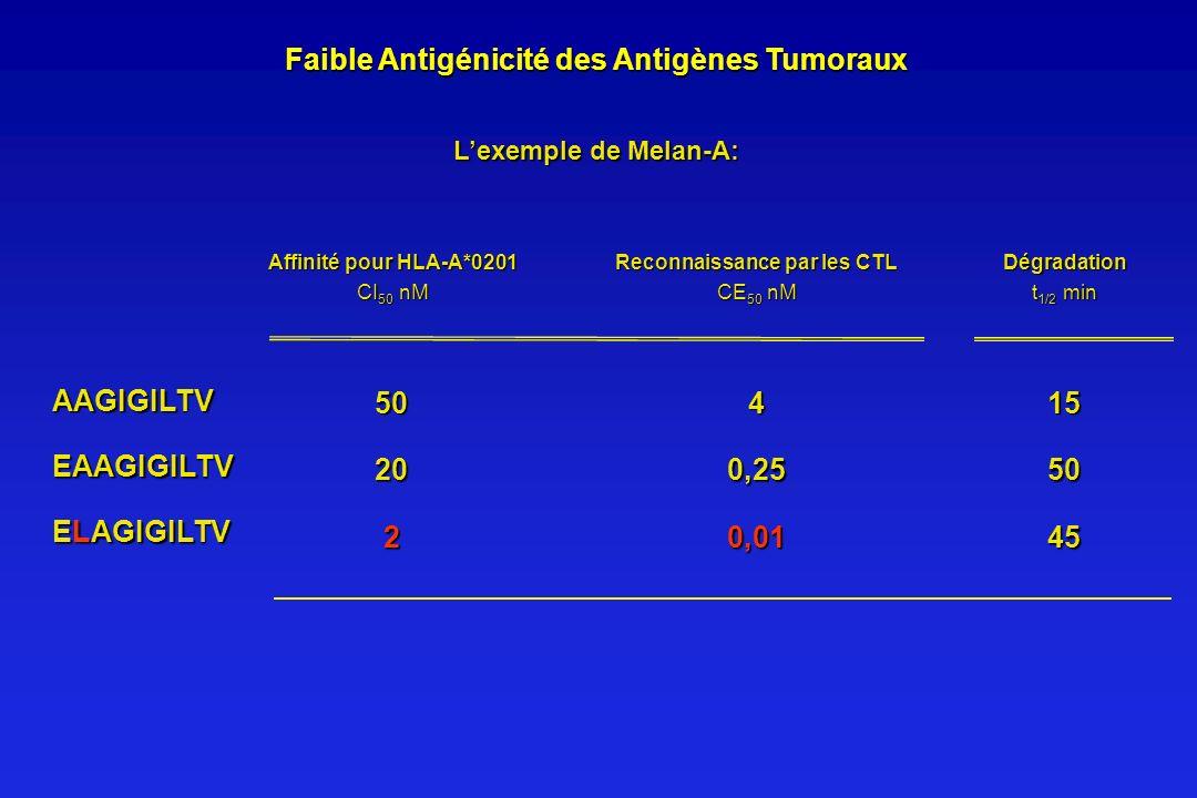 Faible Antigénicité des Antigènes Tumoraux Lexemple de Melan-A: ELAGIGILTV 0,012 AAGIGILTV EAAGIGILTV 4 0,25 50 20 Affinité pour HLA-A*0201 CI 50 nM R