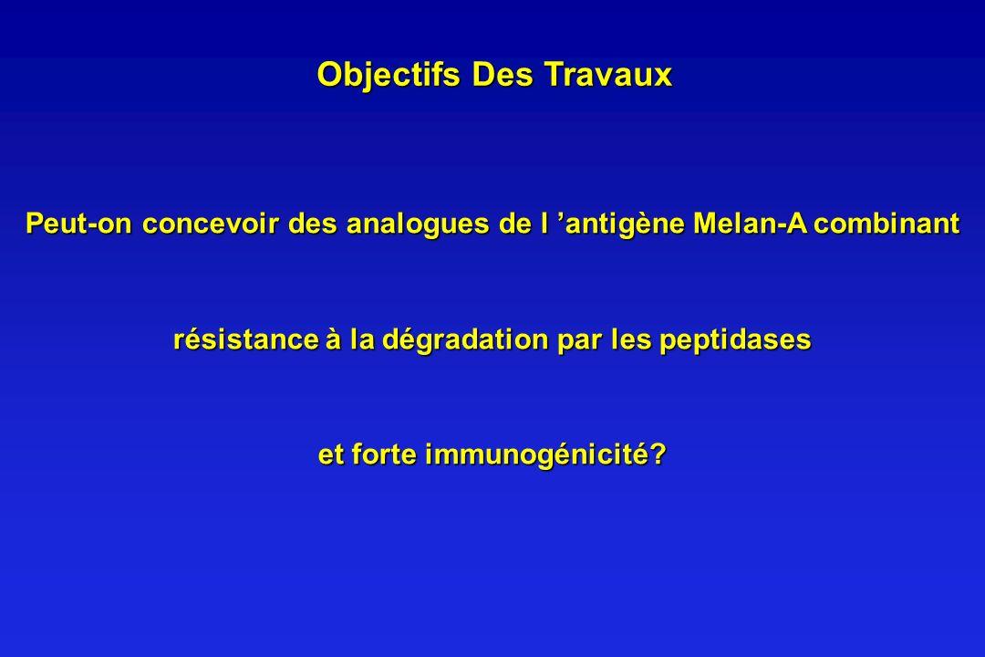 Objectifs Des Travaux Peut-on concevoir des analogues de l antigène Melan-A combinant résistance à la dégradation par les peptidases et forte immunogé