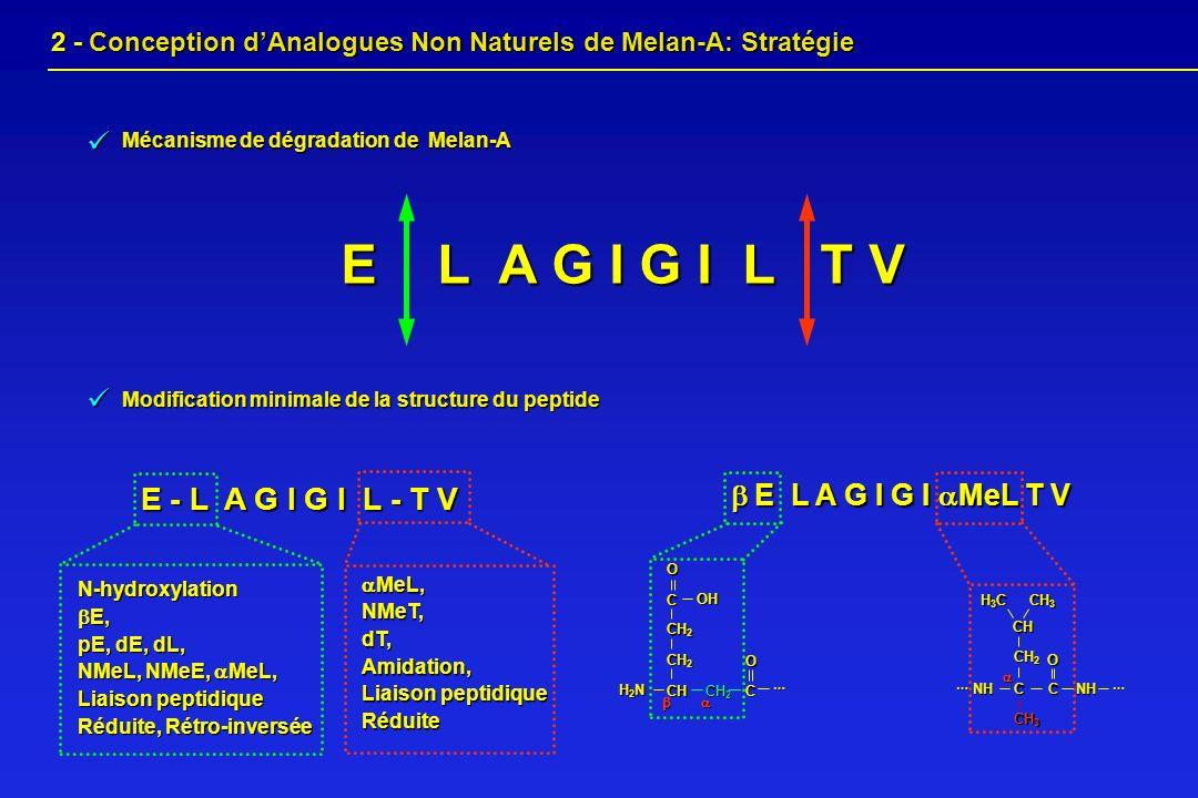 E - L A G I G I L - T V N-hydroxylation E, E, pE, dE, dL, NMeL, NMeE, MeL, Liaison peptidique Réduite, Rétro-inversée MeL, MeL,NMeT,dT,Amidation, Liai