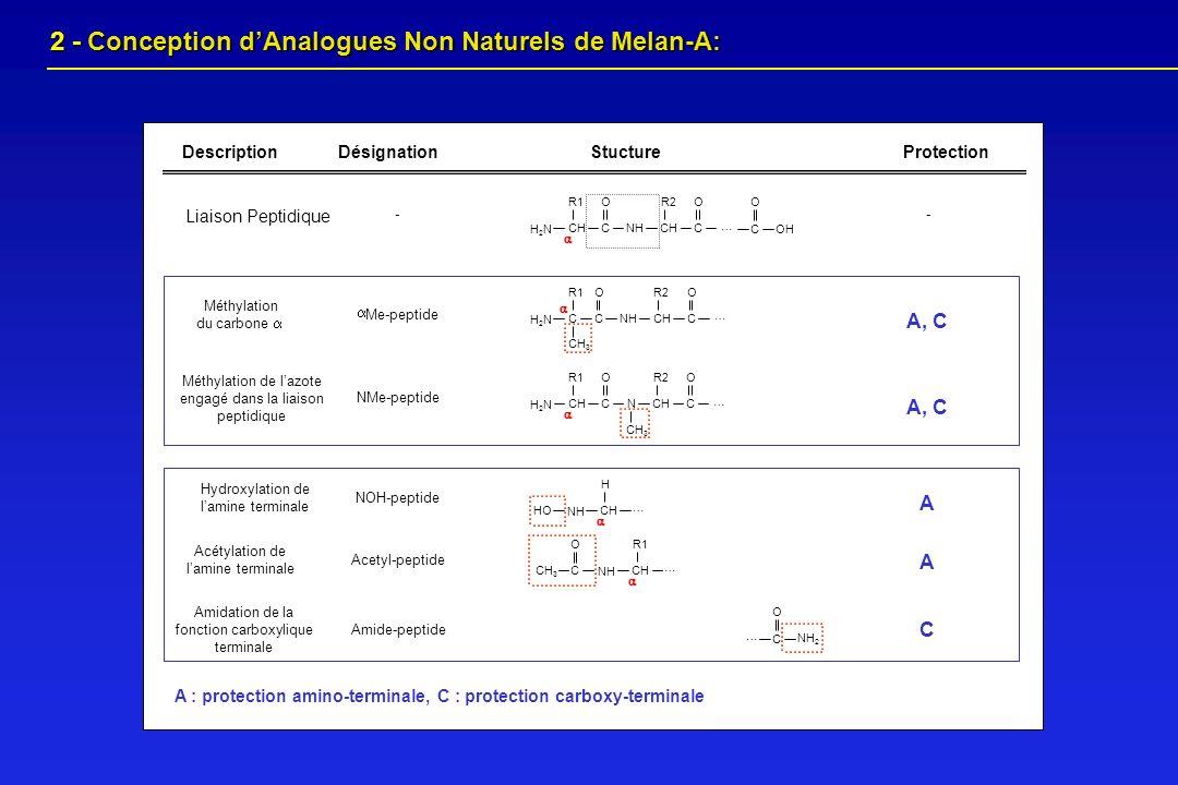 2 - Conception dAnalogues Non Naturels de Melan-A: 2 - Conception dAnalogues Non Naturels de Melan-A: H2NH2N C O … CH R1 CH R2 NH C O C O OH Liaison P