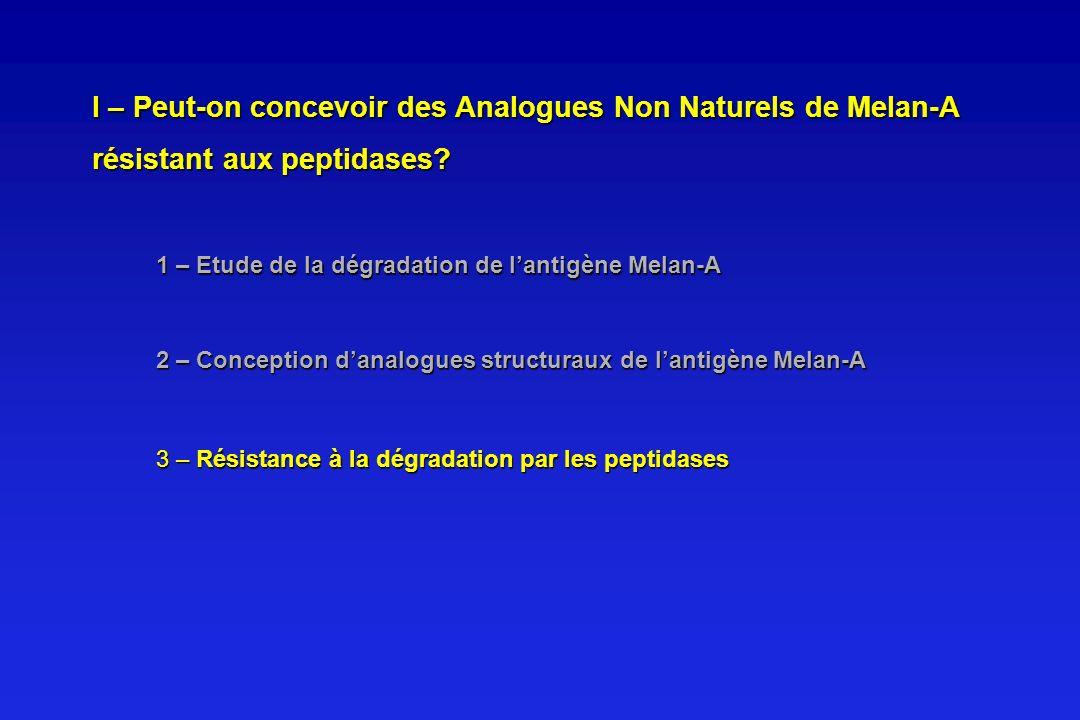 1 – Etude de la dégradation de lantigène Melan-A 2 – Conception danalogues structuraux de lantigène Melan-A 3 – Résistance à la dégradation par les pe