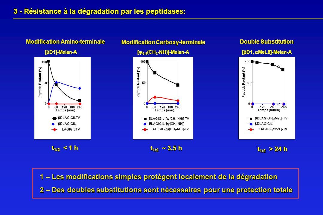 1 – Les modifications simples protègent localement de la dégradation 2 – Des doubles substitutions sont nécessaires pour une protection totale [ D1]-M
