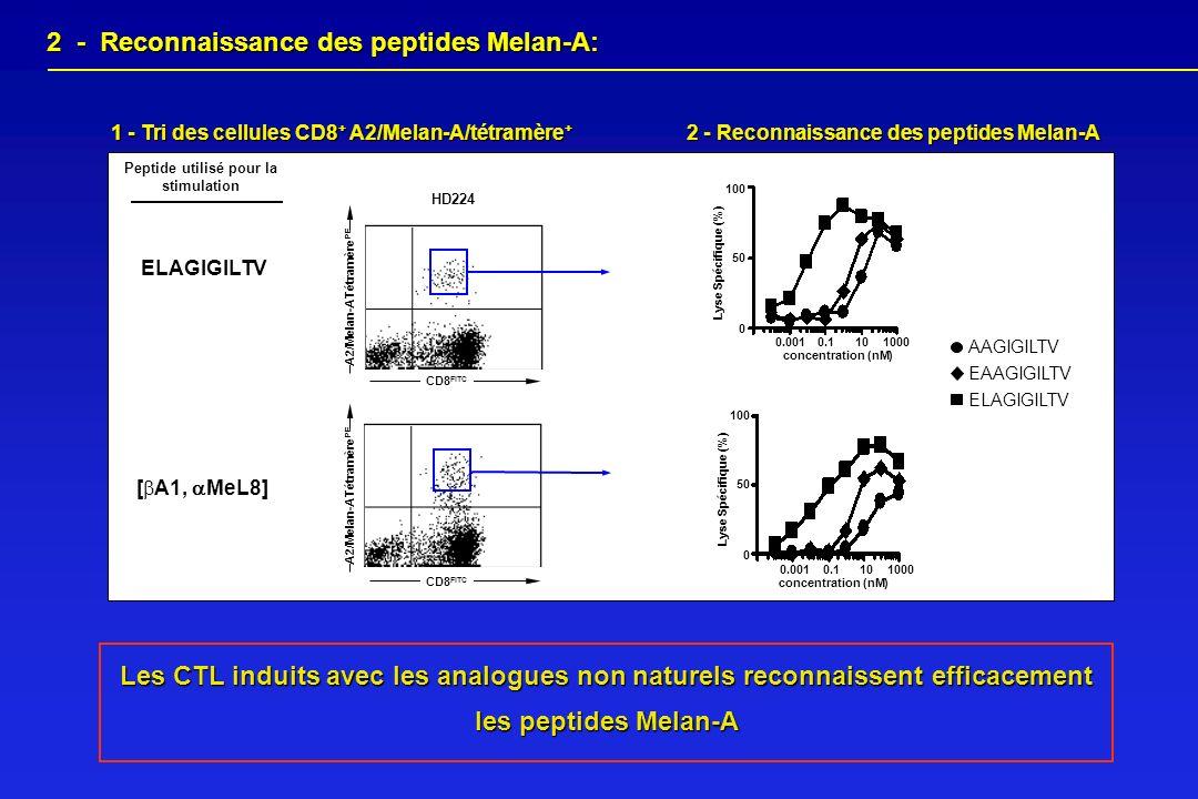 2 - Reconnaissance des peptides Melan-A 100 Lyse Spécifique (%) 50 0 1000100.10.001 concentration (nM) 100 Lyse Spécifique (%) 50 0 1000100.10.001 con