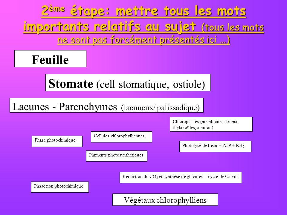 2 ème étape: mettre tous les mots importants relatifs au sujet (tous les mots ne sont pas forcément présentés ici …) Végétaux chlorophylliens Feuille