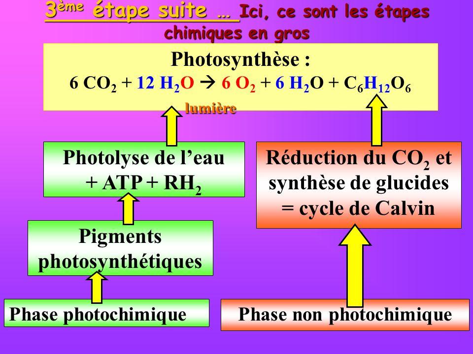 3 ème étape suite … Ici, ce sont les étapes chimiques en gros Phase photochimique Pigments photosynthétiques Phase non photochimique Photolyse de leau