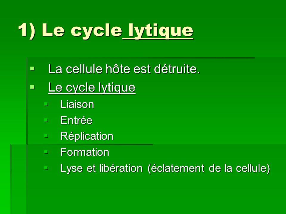 2) Le cycle lysogène 2) Le cycle lysogène La cellule hôte nest pas tuée.