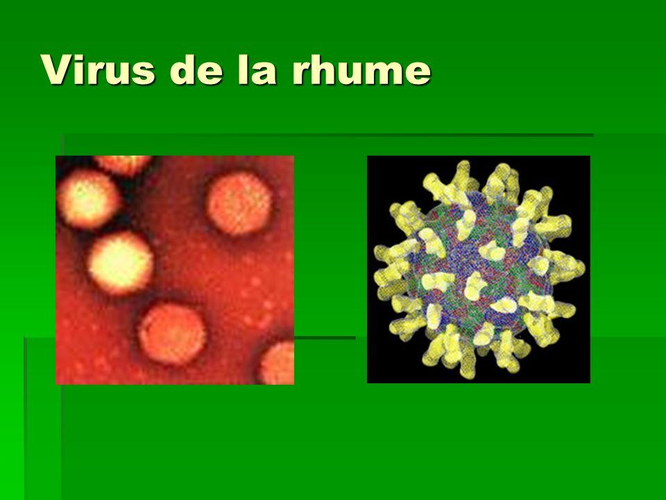 Virus de Polio