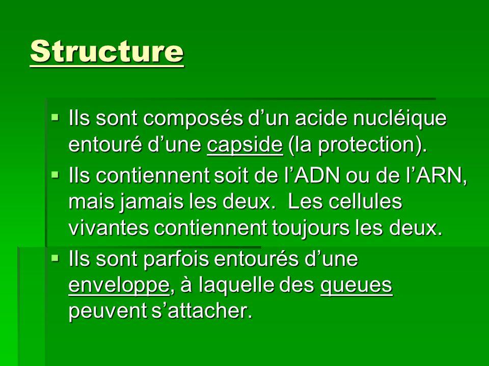 Structure des virus