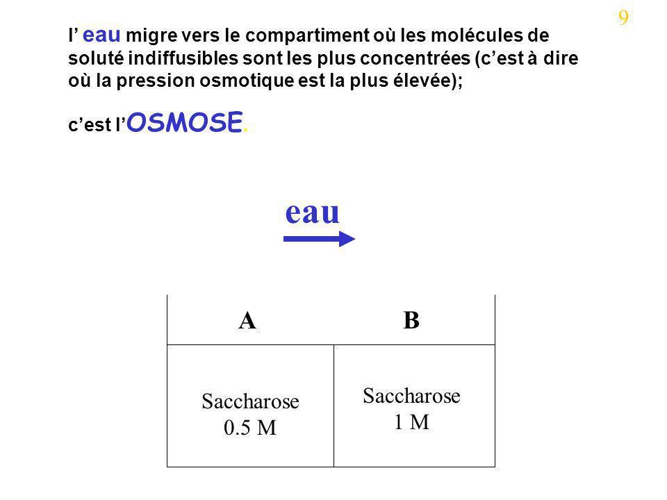 Saccharose 0.5 M Saccharose 1 M AB eau 9 l eau migre vers le compartiment où les molécules de soluté indiffusibles sont les plus concentrées (cest à d