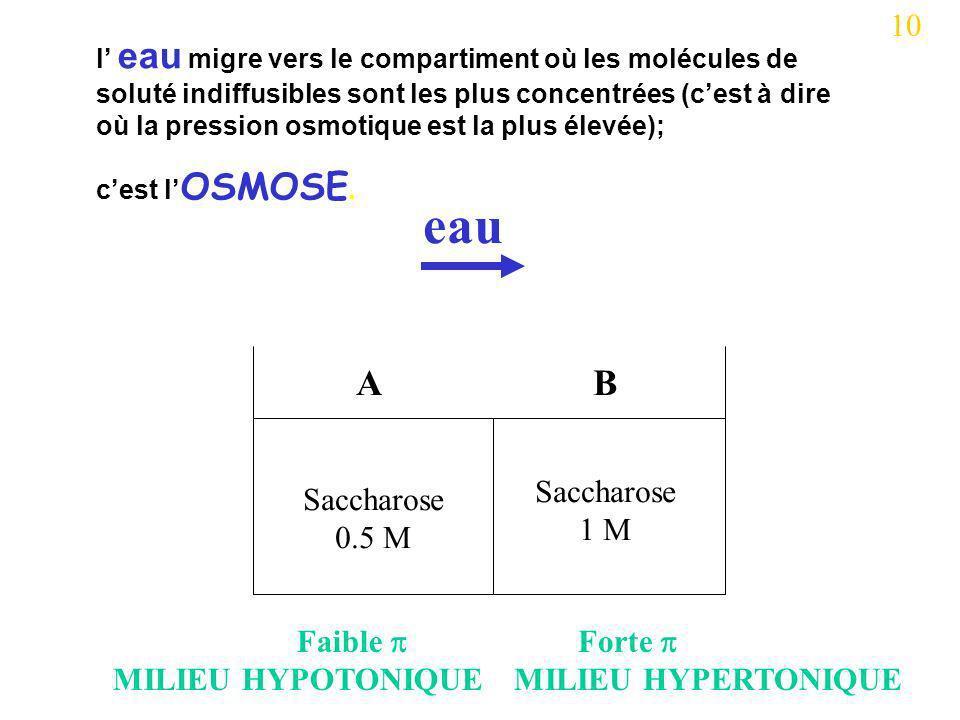 Saccharose 0.5 M Saccharose 1 M AB eau 10 l eau migre vers le compartiment où les molécules de soluté indiffusibles sont les plus concentrées (cest à