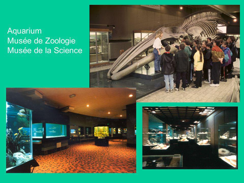 Grande salle des Travaux Pratiques Salle de Travaux Pratiques de biologie : 160 places 1 er bac en médecine vétérinaire : 300 étudiants (Prof.