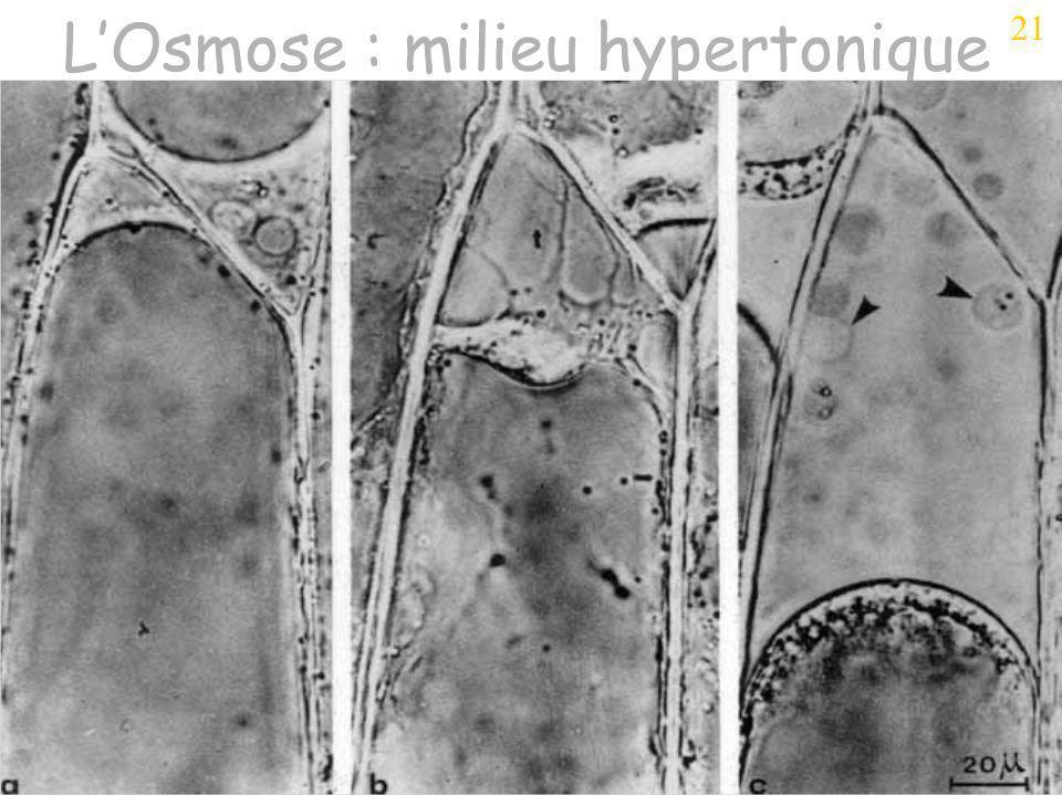 Séance 3 OSMOSE 200241 LOsmose : milieu hypertonique 21