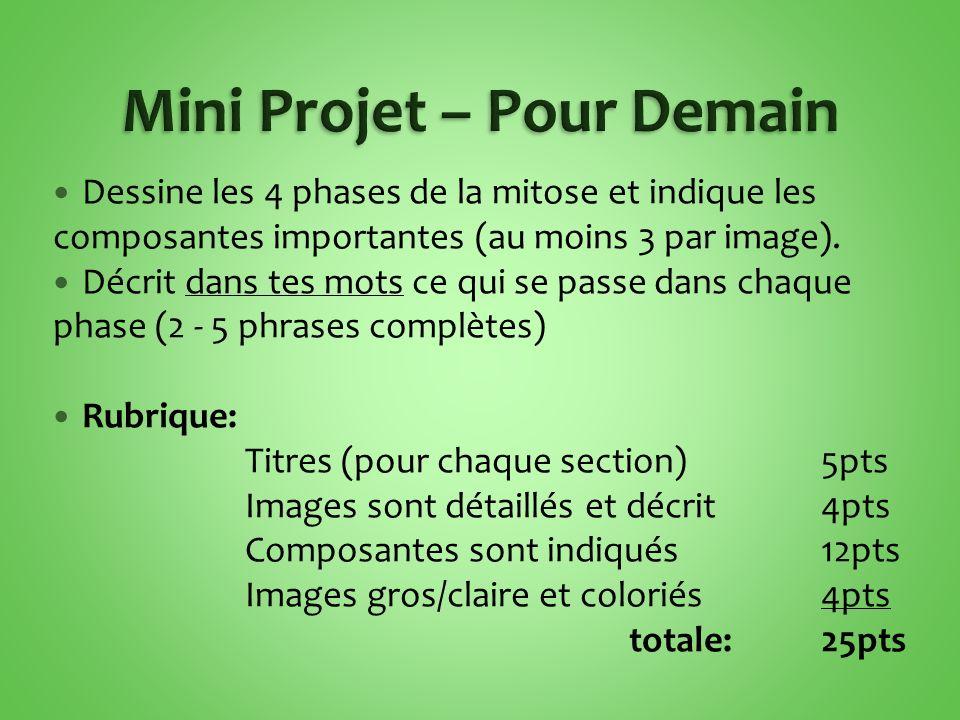 Dessine les 4 phases de la mitose et indique les composantes importantes (au moins 3 par image). Décrit dans tes mots ce qui se passe dans chaque phas