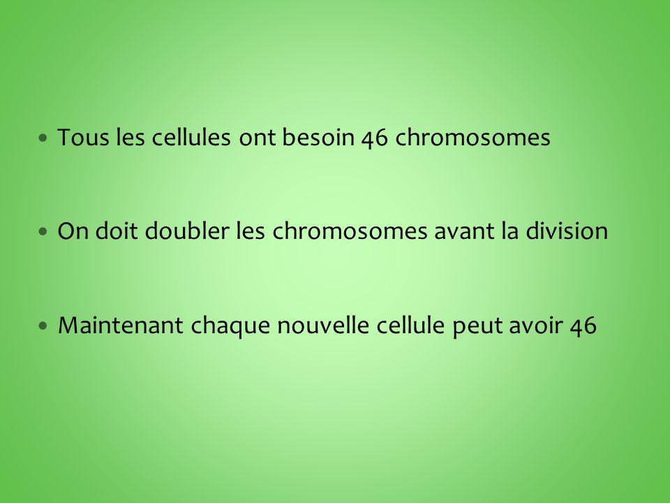 Tous les cellules ont besoin 46 chromosomes On doit doubler les chromosomes avant la division Maintenant chaque nouvelle cellule peut avoir 46