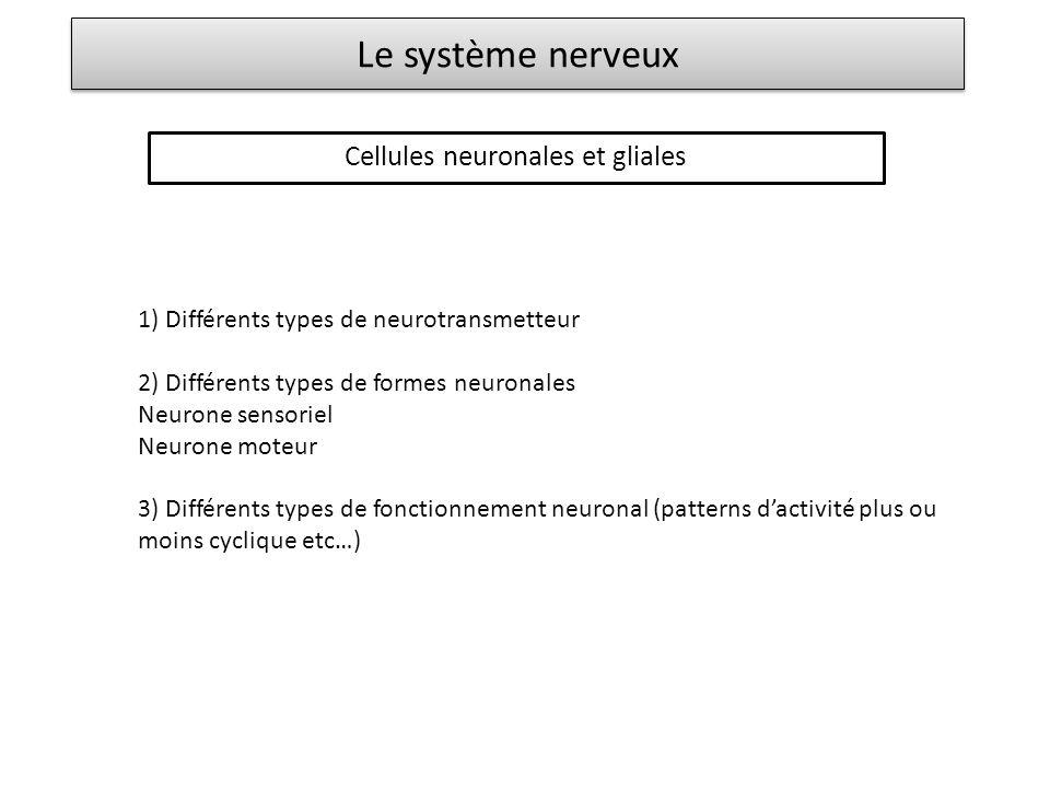Le système nerveux Cellules neuronales et gliales 1) Différents types de neurotransmetteur