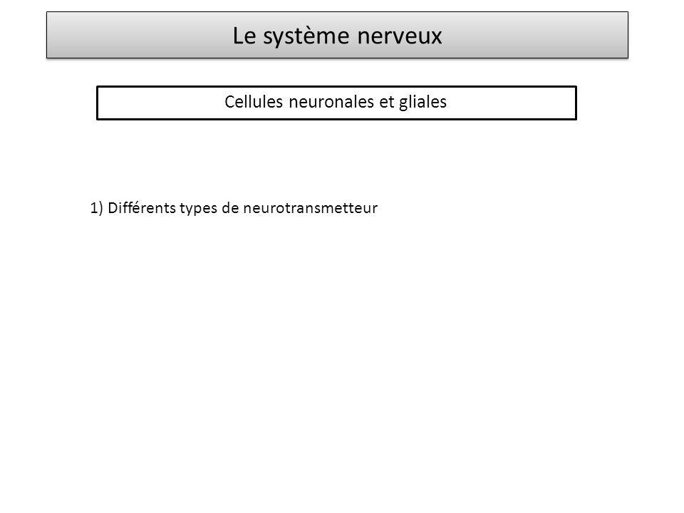 Le système nerveux Cellules neuronales et gliales 1) Différents types de neurotransmetteur Glutamate (principal neurotransmetteur excitateur) GABA (dérivé du glutamate, neurotransmetteur inhibiteur) Sérotonine (dérivée du tryptophane) Acétylcholine Amines (dopamine, noradrénaline, adrénaline, dérivées de la tyrosine) Peptides (endorphines)