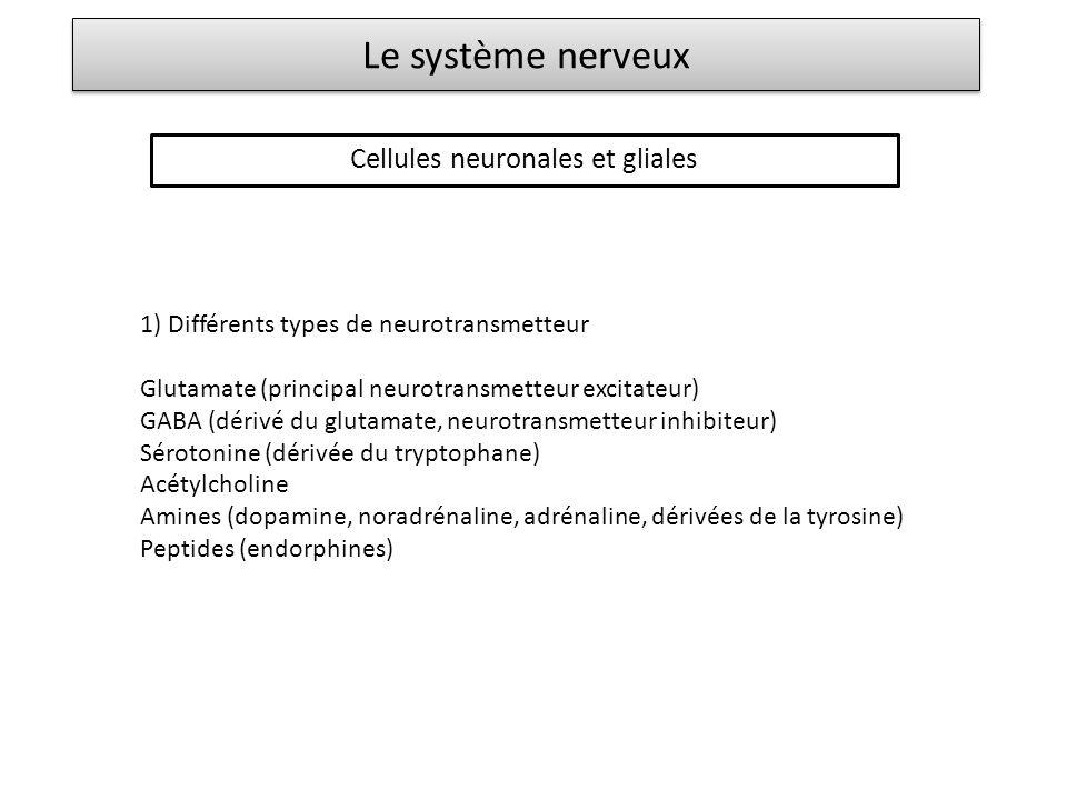 Le système nerveux Cellules neuronales et gliales 1) Différents types de neurotransmetteur Glutamate (principal neurotransmetteur excitateur) GABA (dé