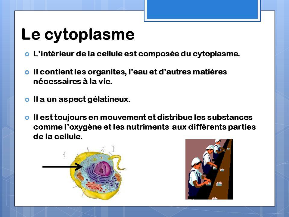 Le cytoplasme L'intérieur de la cellule est composée du cytoplasme. Il contient les organites, l'eau et d'autres matières nécessaires à la vie. Il a u
