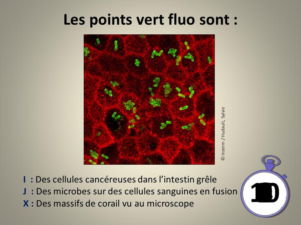 Les points vert fluo sont : 10 8 9 6 7 4 5 21 03 © Inserm / Hudault, Sylvie I : Des cellules cancéreuses dans lintestin grêle J : Des microbes sur des