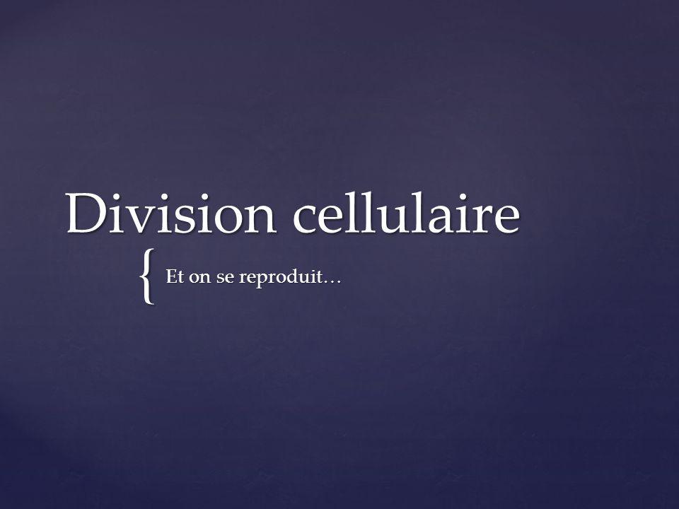 { Division cellulaire Et on se reproduit…